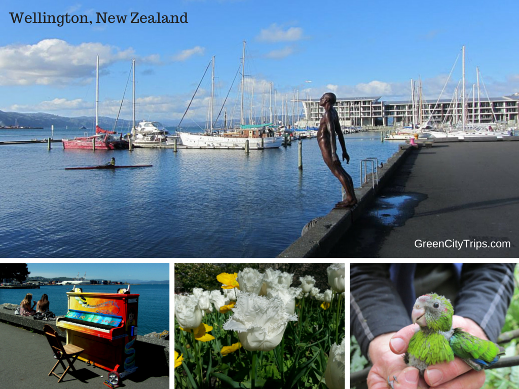 Top Things to Do in New Zealand – Best Tours, Activities, Day Trips