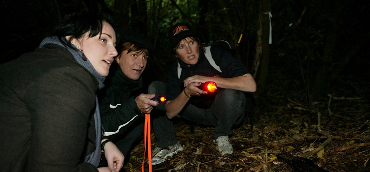 Zealandia Sanctuary night tour review