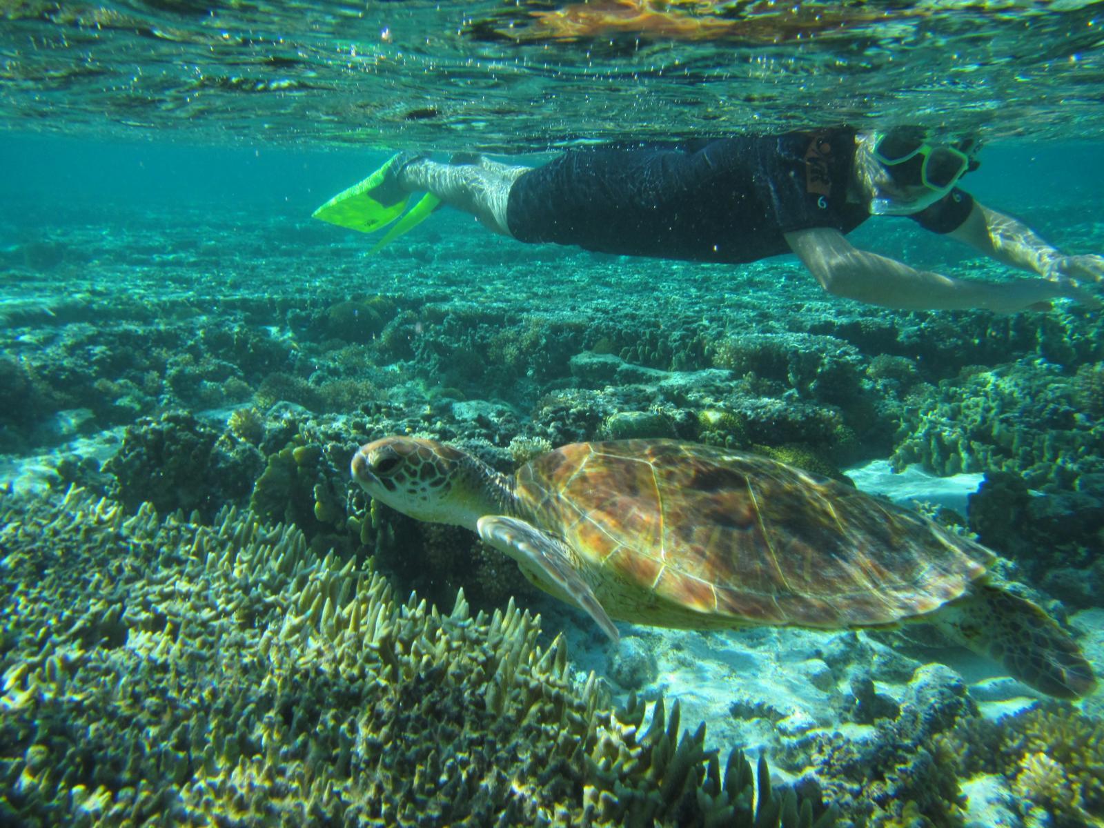 Lady Elliot Island Eco Resort, Great Barrier Reef, Queensland, Australia
