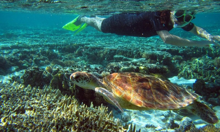 Swim with turtles at Lady Elliot Island Eco Resort, Great Barrier Reef