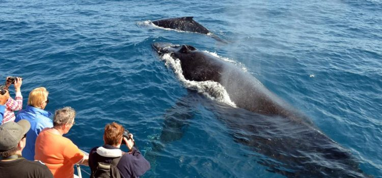Brisbane City Escape: Whale Watching in Hervey Bay, Queensland