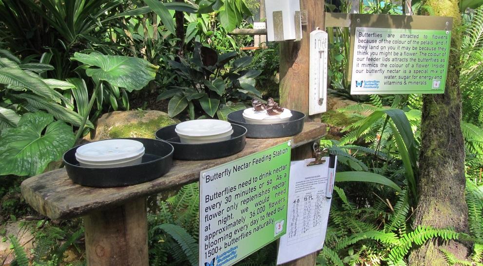 Butterfly Sanctuary in Kuranda Village near Cairns, Australia