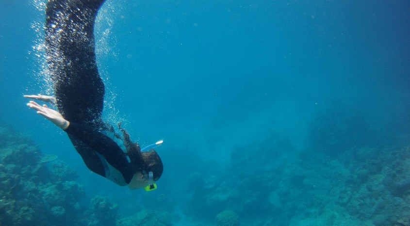 Snorkeling along Great Barrier Reef with Passions of Paradise