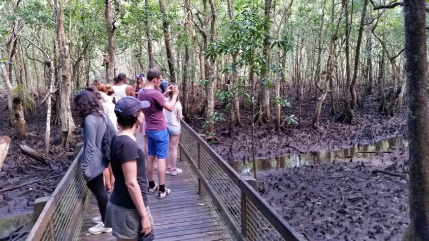 Afternoon walk with Active Explorer Tours, Cape Tribulation