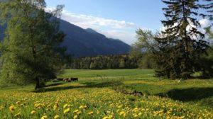 Fuerstenwald Forest in Chur
